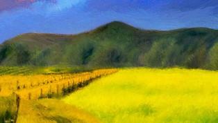 Napa Fields-2